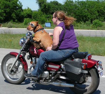 Motorcycle_dog_flickr_photo_sharing